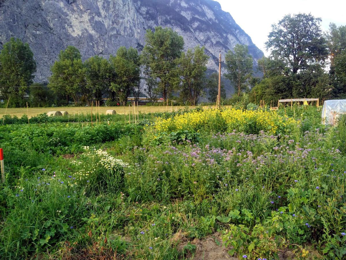Wildblumen und Co.